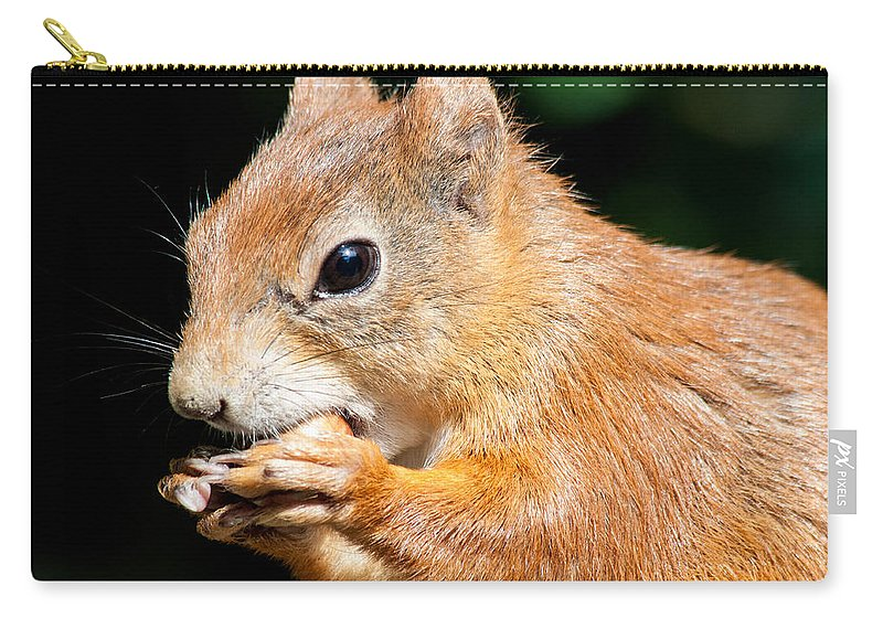 British Wildlife Centre Carry-all Pouch featuring the photograph Red Squirrel by Dawn OConnor