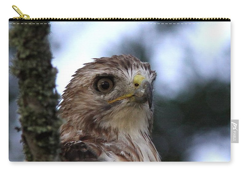 Red-tailed Hawk Carry-all Pouch featuring the photograph Red-tailed Hawk - Hawkeye by Travis Truelove