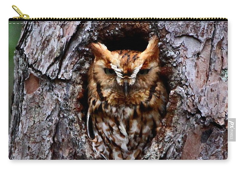 Eastern Screech Owl Carry-all Pouch featuring the photograph Reddish Screech Owl by Barbara Bowen