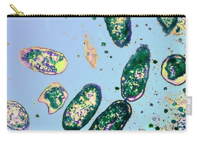 Rickettsia Rickettsii Carry-all Pouch featuring the photograph Rickettsia Rickettsii by ASM/Science Source