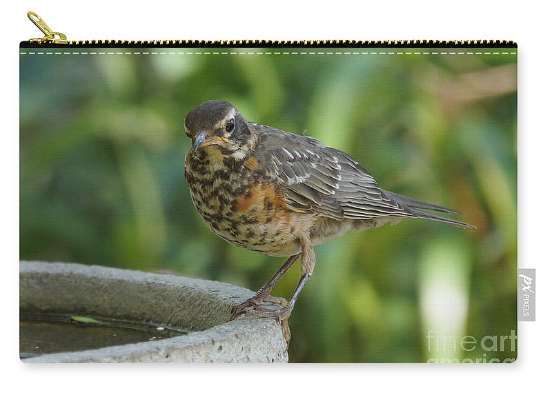 Robin Carry-all Pouch featuring the photograph Robin Contemplating Getting In by Lori Tordsen