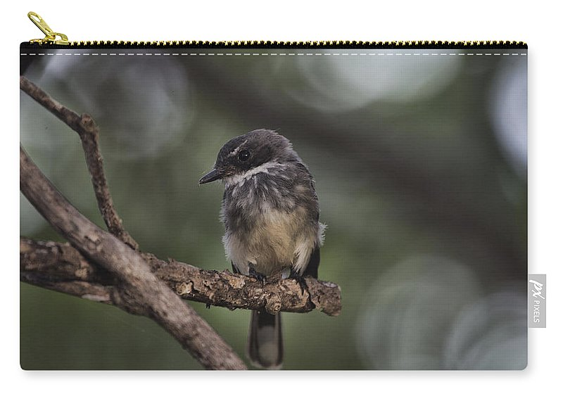 Robin Carry-all Pouch featuring the photograph Robin Top-End Australia by Douglas Barnard