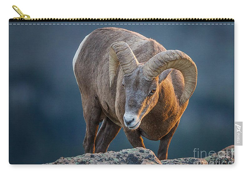 2012 Carry-all Pouch featuring the photograph Rocky Mountain Big Horn Ram by Ronald Lutz