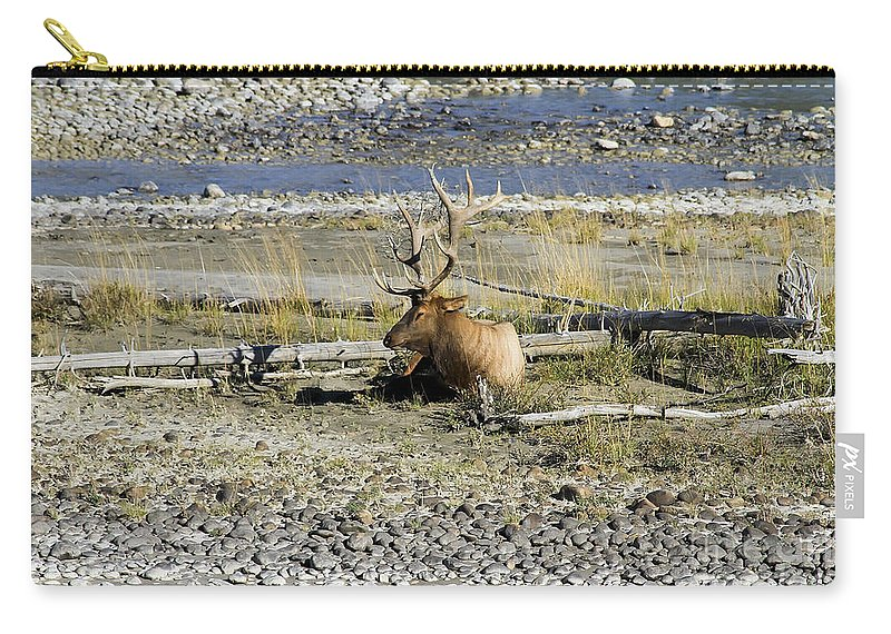 Animal Carry-all Pouch featuring the photograph Rocky Mountains Elk by Teresa Zieba