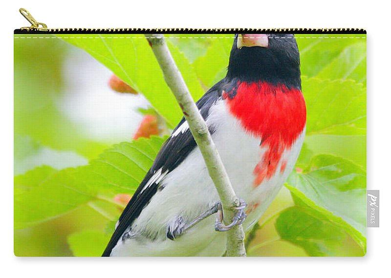 Rose-breasted Grosbeak Carry-all Pouch featuring the photograph Rose-breasted Grosbeak by Andrew McInnes
