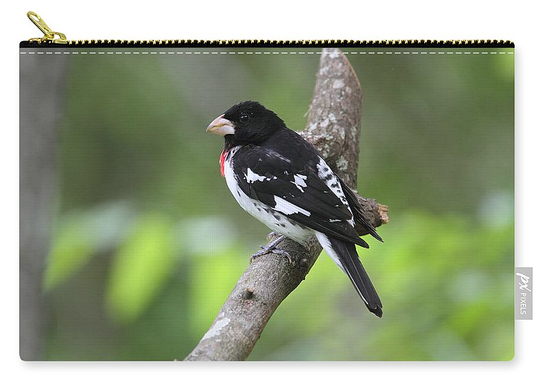 Doug Lloyd Carry-all Pouch featuring the photograph Rose-breasted Grosbeak by Doug Lloyd