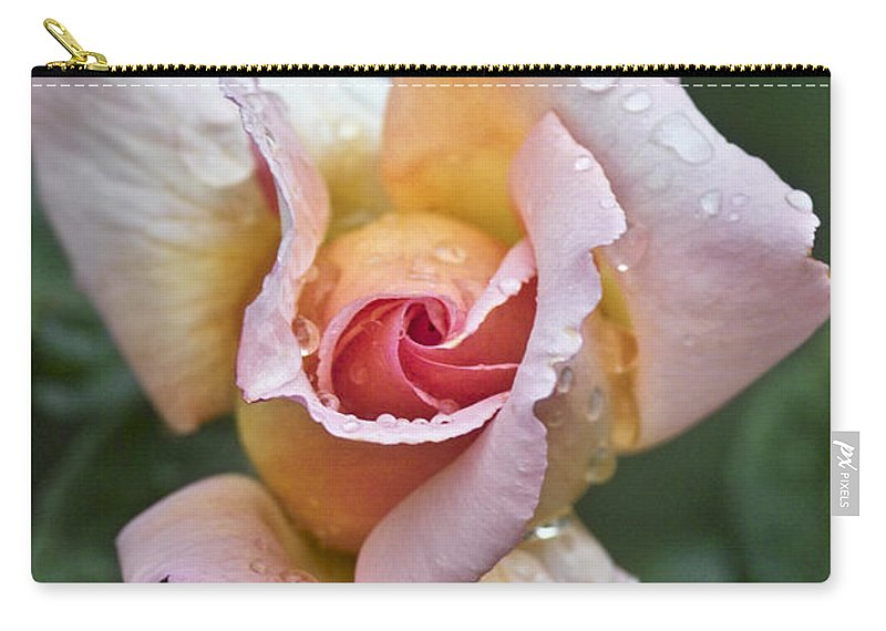 Rose Carry-all Pouch featuring the photograph Rose Flower Series 11 by Heiko Koehrer-Wagner