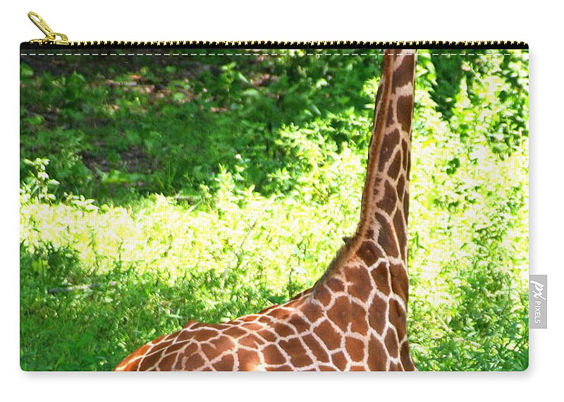 Giraffe Carry-all Pouch featuring the photograph Rothschild Giraffe by Laurel Talabere