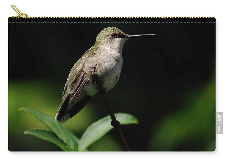 Green Carry-all Pouch featuring the photograph Ruby-throated Hummingbird Female by Ronald Grogan