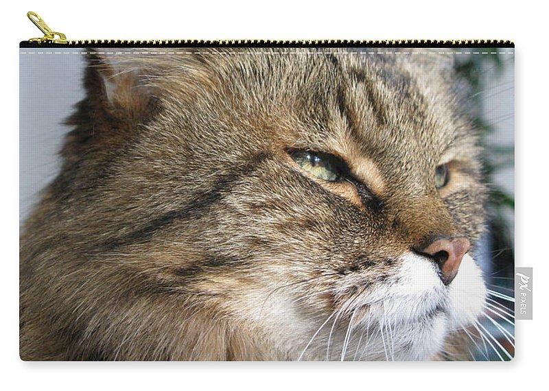 Cat Carry-all Pouch featuring the photograph Runcius- My King Kitty Enjoying The Sunshine by Ausra Huntington nee Paulauskaite