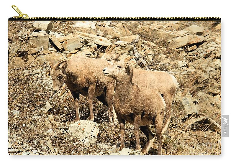 Big Horn Sheep Carry-all Pouch featuring the photograph Safety In Numbers by Adam Jewell