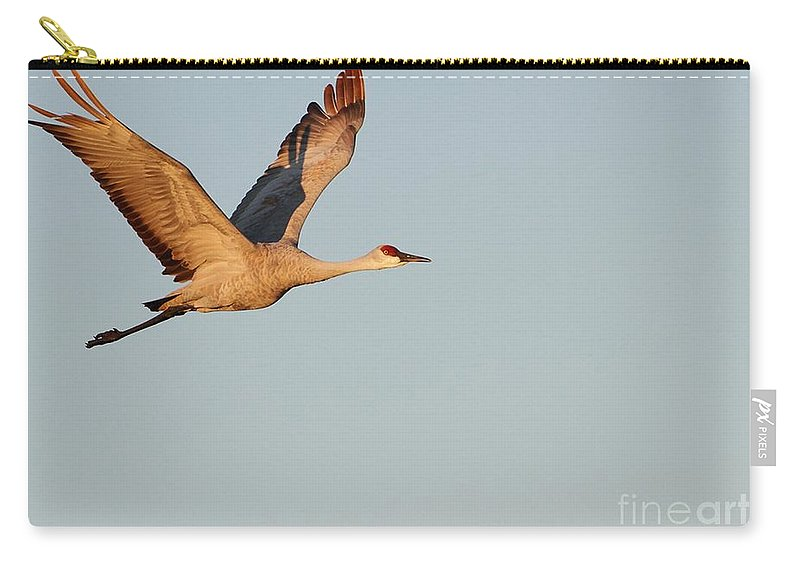Animal Carry-all Pouch featuring the photograph Sandhill Crane In The Morning Light by Sabrina L Ryan