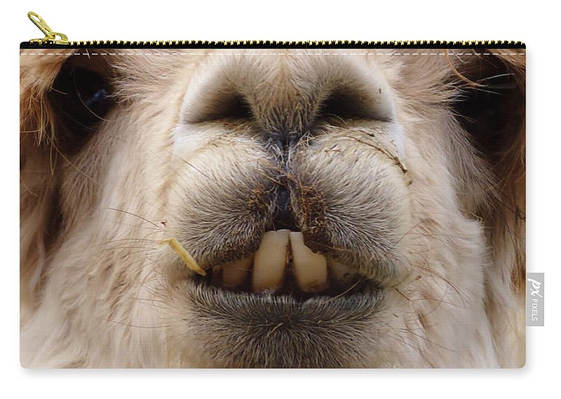 Llama Carry-all Pouch featuring the photograph Say Wha by Art Dingo