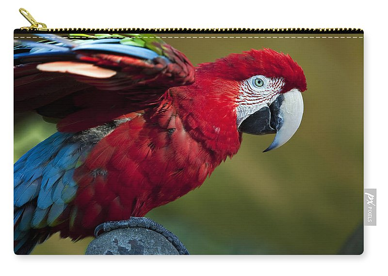 Bird Carry-all Pouch featuring the photograph Scarlet Macaw by Amy Jackson