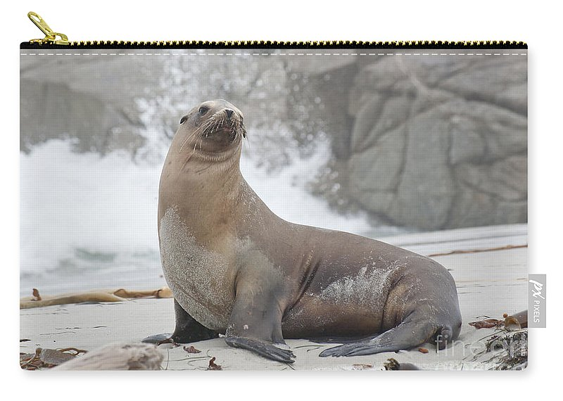 Sea Lion Carry-all Pouch featuring the photograph Sea Lion Monterey by Jim And Emily Bush