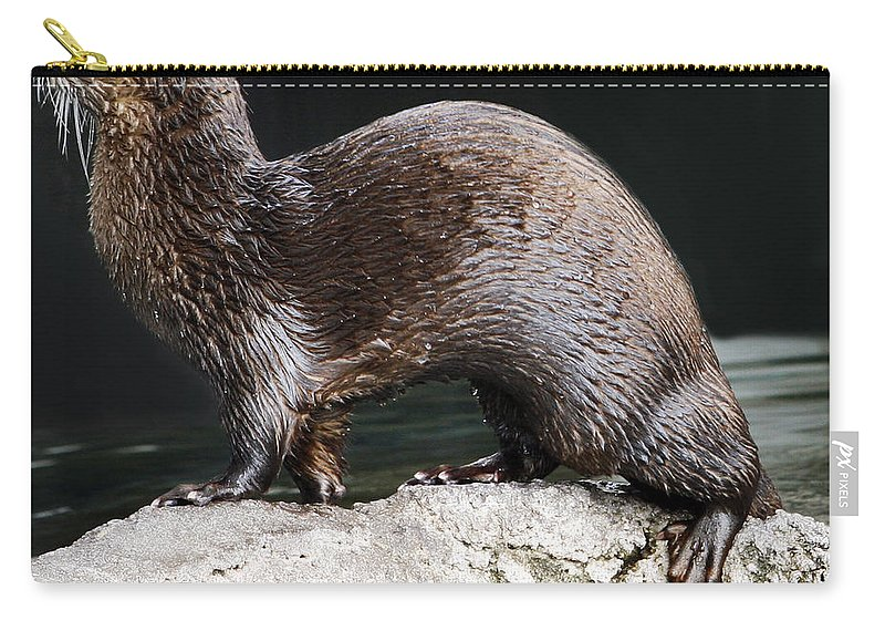 Sea Carry-all Pouch featuring the photograph Sea Otter by Marilyn Hunt