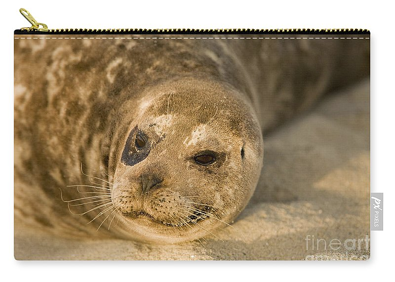 La Jolla Carry-all Pouch featuring the photograph Seal 1 by Daniel Knighton
