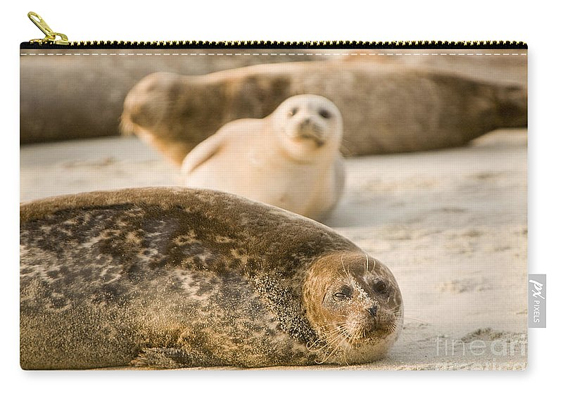 La Jolla Carry-all Pouch featuring the photograph Seal 3 by Daniel Knighton