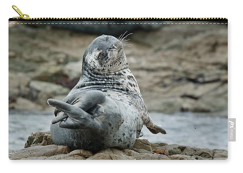 Seal Carry-all Pouch featuring the photograph Seal Stretch by Greg Nyquist
