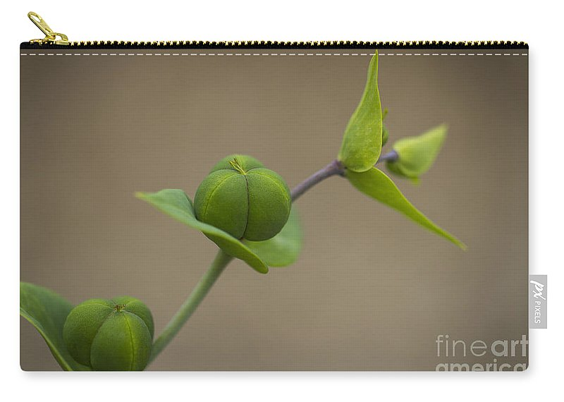 Clare Bambers Carry-all Pouch featuring the photograph Seed Pods by Clare Bambers