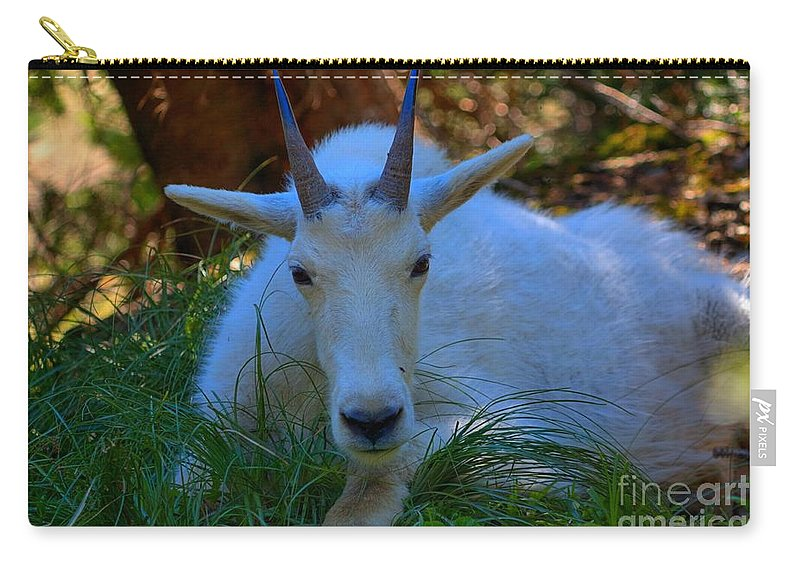 Glacier National Park Carry-all Pouch featuring the photograph Shady Goat by James Anderson