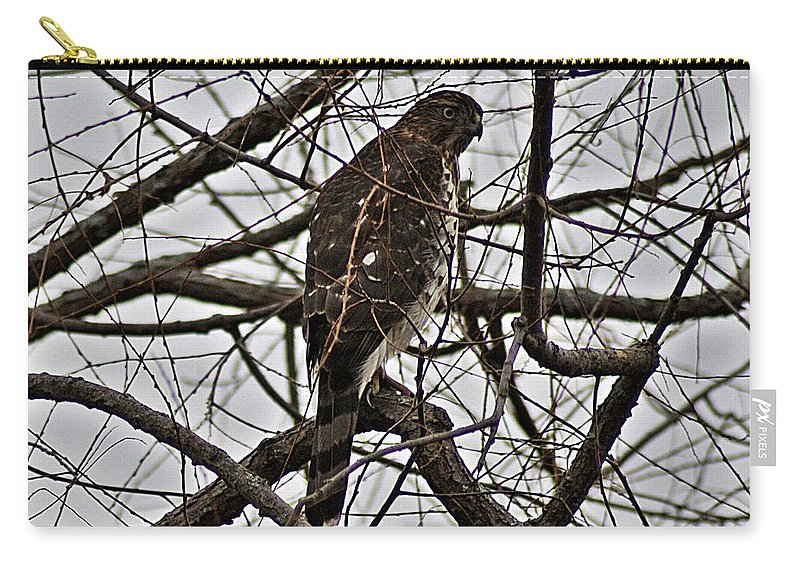 Sharp Carry-all Pouch featuring the photograph Sharp Shinned Hawk by Joe Faherty