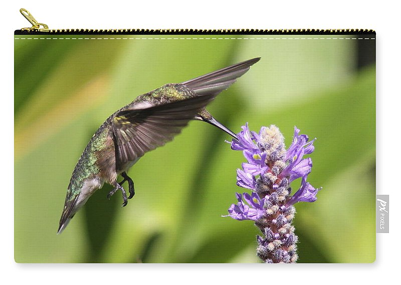 Hummingbird Carry-all Pouch featuring the photograph Sheer Beauty by Travis Truelove