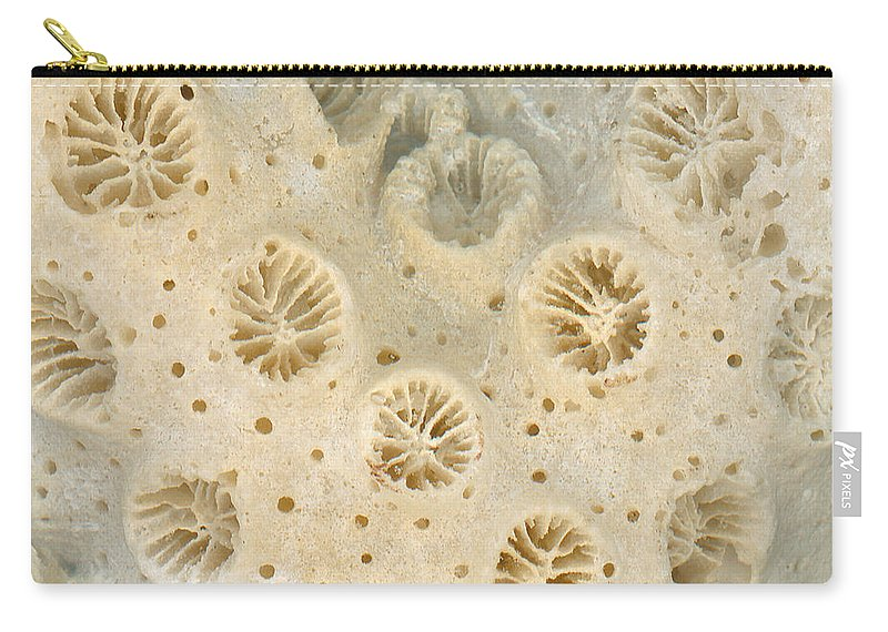 Macro Carry-all Pouch featuring the photograph Shell - Conchology - Coral by Mike Savad