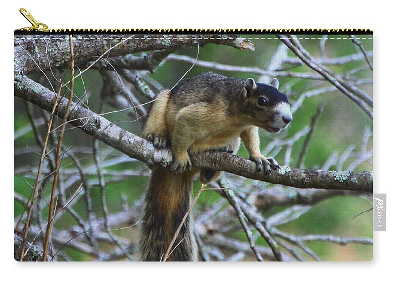 Shermans Fox Squirrel Carry-all Pouch featuring the photograph Shermans Fox Squirrel by Barbara Bowen