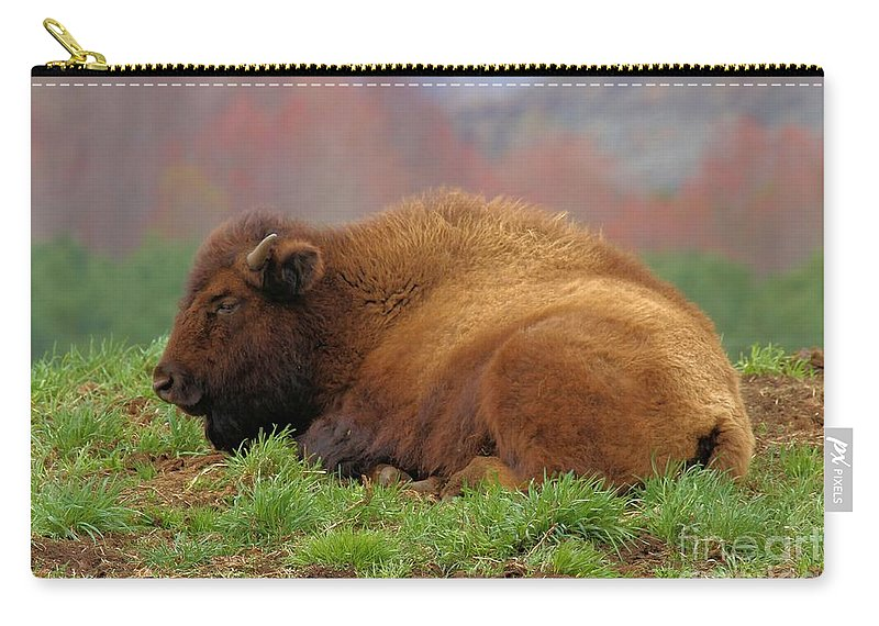 Bison Carry-all Pouch featuring the photograph Siesta by Adam Jewell