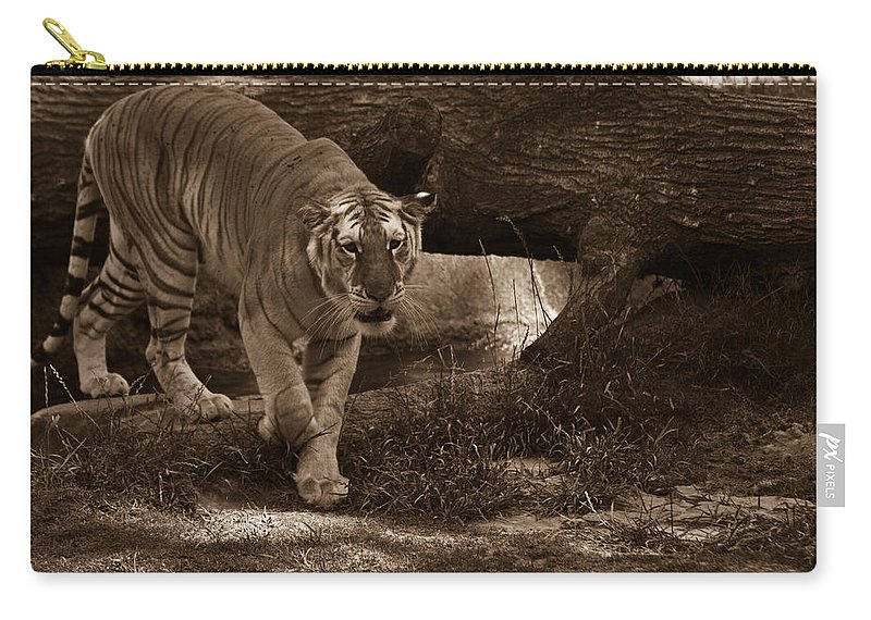 Simba Carry-all Pouch featuring the photograph Simba 1 by Douglas Barnett