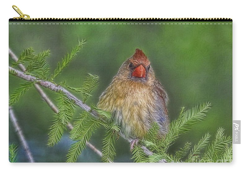 Cardinal Carry-all Pouch featuring the photograph Sitting In The Cedar by Deborah Benoit