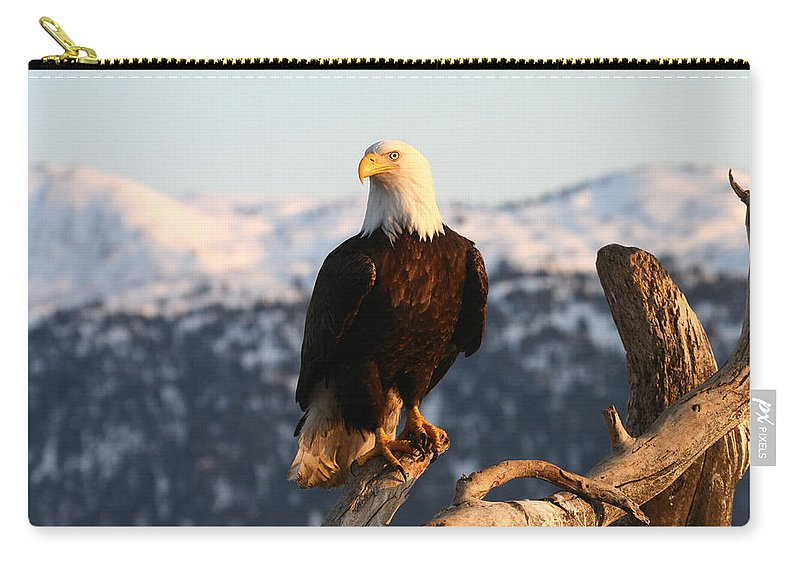 Doug Lloyd Carry-all Pouch featuring the photograph Sitting In The Morning Sun by Doug Lloyd