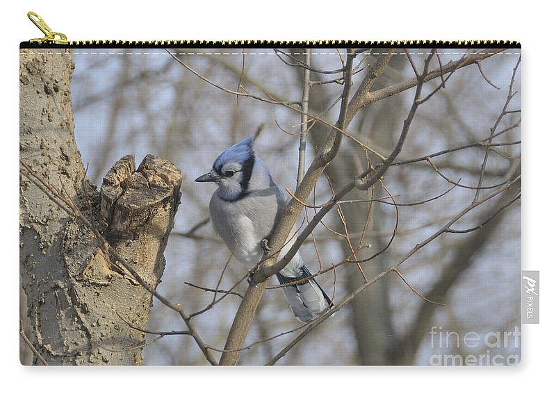 Blue Jay Carry-all Pouch featuring the photograph Sitting Pretty by David Arment