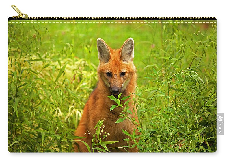 Maned Wolf Carry-all Pouch featuring the photograph Sitting Wolf by Karol Livote