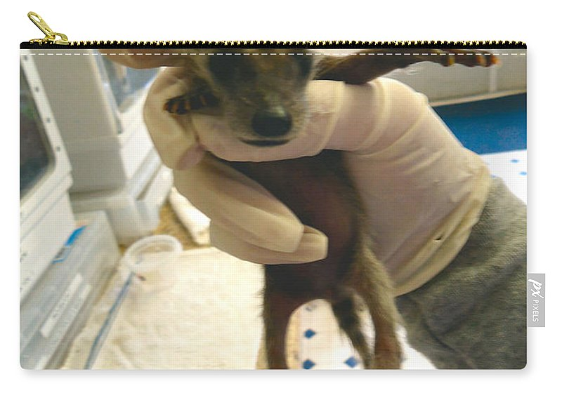 Hold Carry-all Pouch featuring the photograph Slinky by Art Dingo