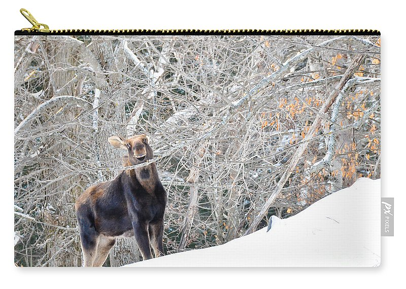 Moose Carry-all Pouch featuring the photograph Smiling Moose by Cheryl Baxter