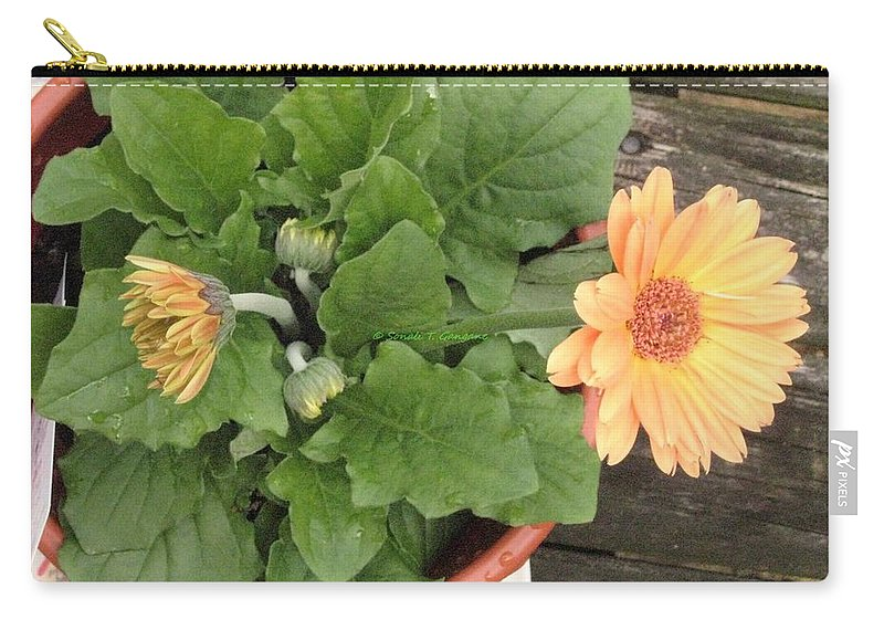 Orange Zerbera Carry-all Pouch featuring the photograph Smiling Orange Zerbera Flower by Sonali Gangane