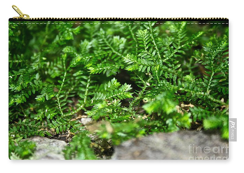 Tropical Plant Carry-all Pouch featuring the photograph Sneaky Green by Susan Herber