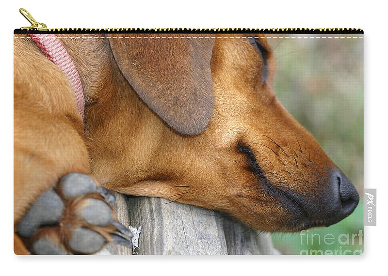 Miniature Daschaund Carry-all Pouch featuring the mixed media Sniffing Out Dreams by Kim Henderson