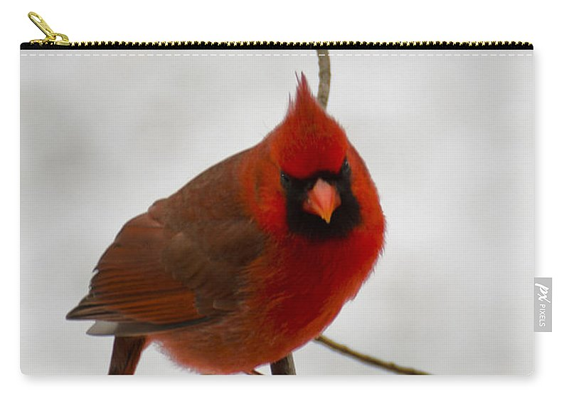 Usa Carry-all Pouch featuring the photograph Snow Cardinal by LeeAnn McLaneGoetz McLaneGoetzStudioLLCcom