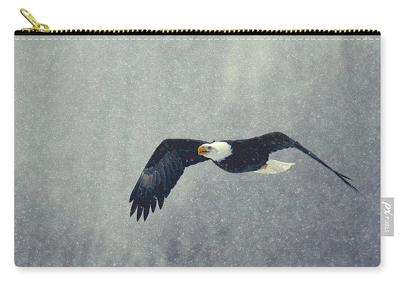Eagle bald Eagle Birds Nature birds In Flight Carry-all Pouch featuring the photograph Snow Flight by Myrna Bradshaw