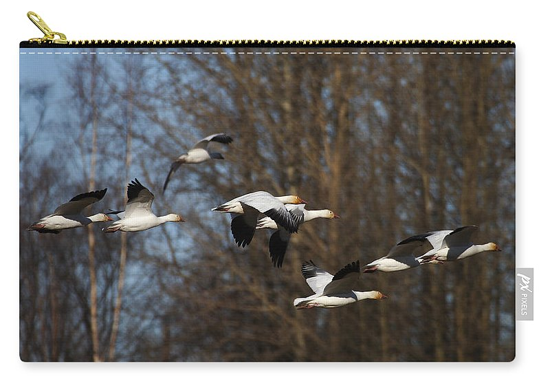 Alaska Carry-all Pouch featuring the photograph Snow Geese by Doug Lloyd