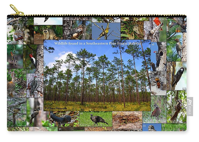 Pine Forest Carry-all Pouch featuring the photograph Southeastern Pine Forest Wildlife Poster by Barbara Bowen