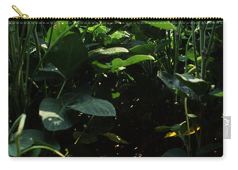 Soybean Carry-all Pouch featuring the photograph Soybean Leaves by Photo Researchers