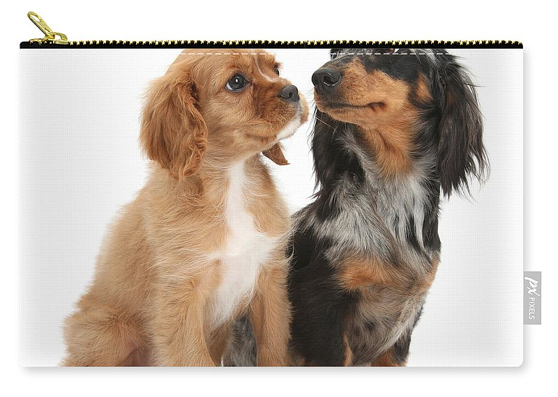 Spaniel Puppy And Full-grown Dachshund Carry-all Pouch for Sale by ...