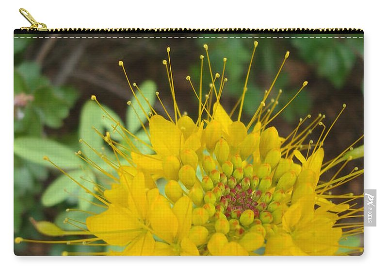 Nature Carry-all Pouch featuring the photograph Yellow Bee Plant Sparks by Maili Page