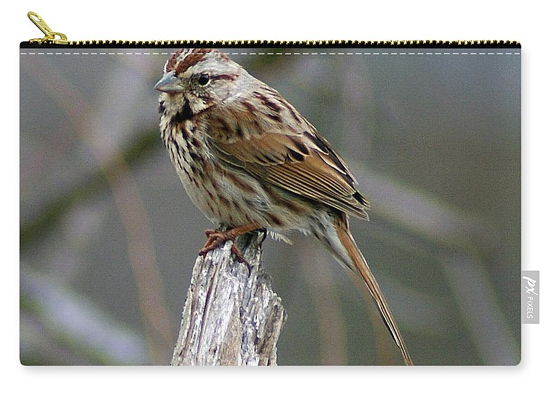 Sparrow Carry-all Pouch featuring the photograph Sparrow Iv by Joe Faherty