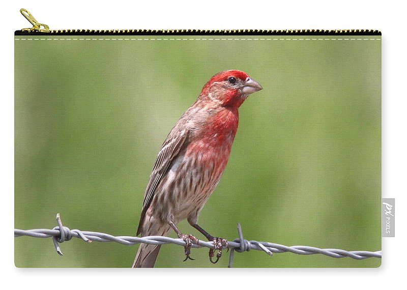 House Finch Carry-all Pouch featuring the photograph Speckled In Red by Travis Truelove