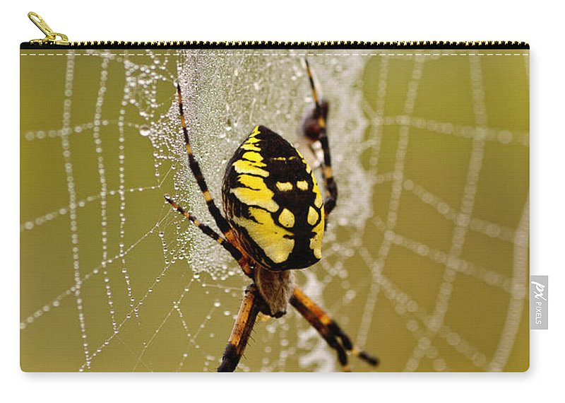 Spider Carry-all Pouch featuring the photograph Spider Power by Susan Capuano